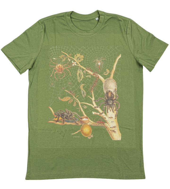 t-shirt spiders, ants
